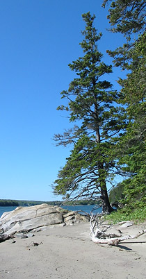 early-island-120x176.jpg